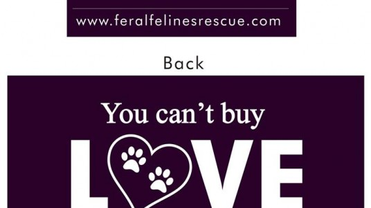 Feral Felines Rescue – Love Theme