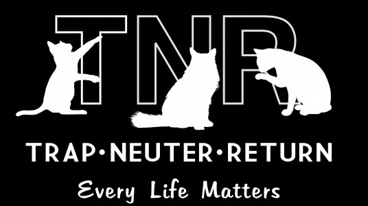FERAL FELINES RESCUE – TNR