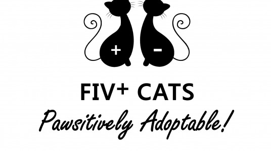 Feral Felines Rescue – FIV+ Cats