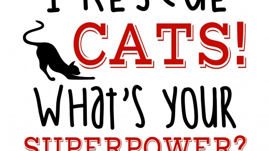 Feral Felines Rescue – Superpower